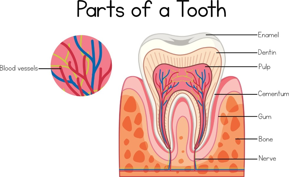 How to Know if Your Tooth is Infected